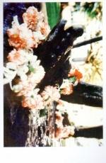 Postcards for Gandhi, SAHMAT, 1995-3